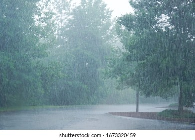 landscape of heavy rain and trees