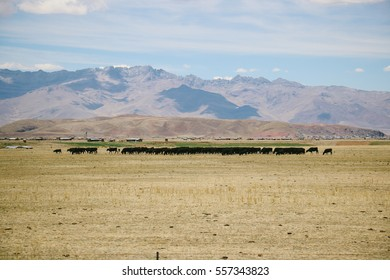 Landscape of the high plateau of the Andes. Taken on the way from Puno to Cusco, Peru.