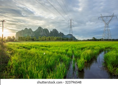 Landscape of High-voltage power line on cornfield