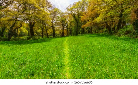 Landscape hiking trail through green meadow with trees in spring