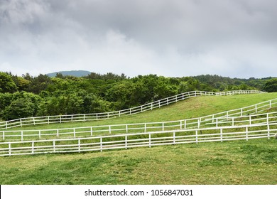 landscape of horse ranch in Jeju island. Jeju-do is the largest island of Kroea and a famous attraction. Jeju is historically famous for horses, and there are still many ranches.
