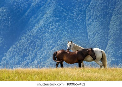 Landscape with horses in front of the mountain covered with woods. Romatic animal couple on pasture.