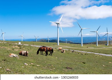 Landscape with horses, wind turbines for electric power generation, blue sky and clouds. Galicia, Spain.