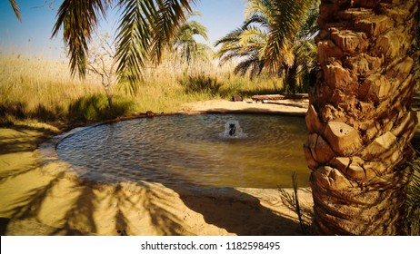 Landscape with hot spring in Siwa oasis at Egypt
