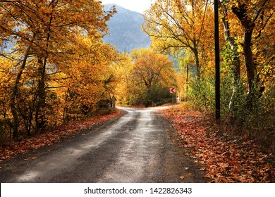 Landscape image of dirt forked country road with colorful autumn leaves and trees in forest of Mersin, Turkey