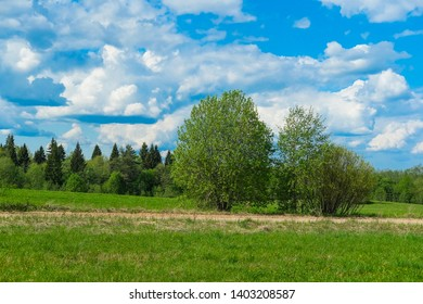 Landscape with the image of forest