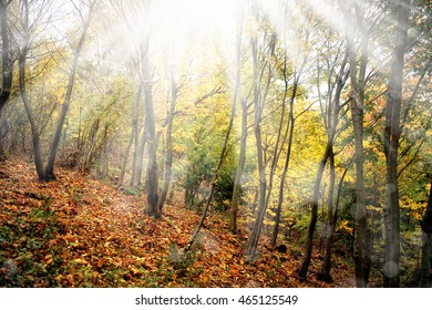 landscape image of forest in autumn
