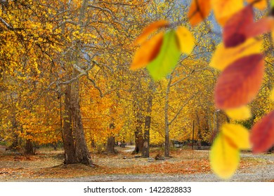 Landscape image of forest with colorful autumn leaves and trees in Mersin, Turkey