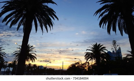 Landscape image of Perth (Australia) Sunset framed by Palm Tree Silhouettes at Langley Park (East Perth)