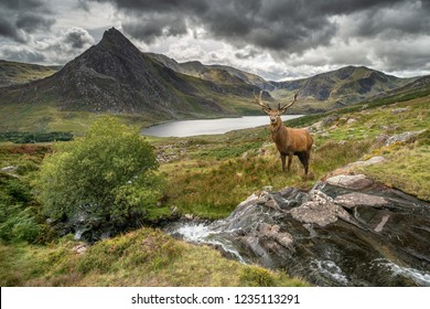 Landscape image of red deer stag by river flowing down mountain range in Autumn