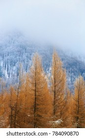 Landscape image of winter scenery in Mala Fatra, Slovakia. Vertical image with a focus on orange trees and copy space above them.