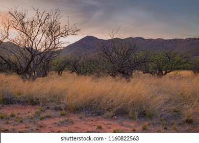 Landscape images of the Sonoran desert south east of Tucson looks different than the terrain in the Sonoran near Phoenix, Arizona. Here tall, dead grass is golden with the occasional tree and open