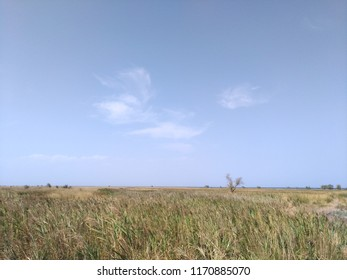 Landscape of the island Dzharylgach, tree, clouds sky steppe thin strip of the sea