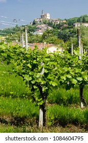 Landscape of a Italian vineyard valley
