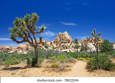 Landscape with joshua tree (Joshua Tree NP)