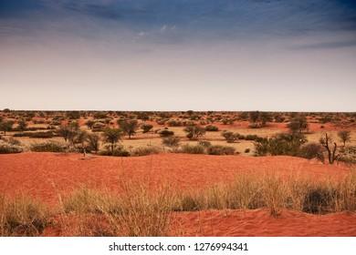 Landscape of the Kalahari desert in Namibia, Africa