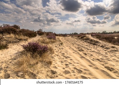 Landscape of Kalmthoutse Heide heathland nature reserve in Belgium on a sunny cloudy day