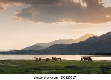 Landscape with lake and pasture in Manzanares el Real, Madrid. Spain