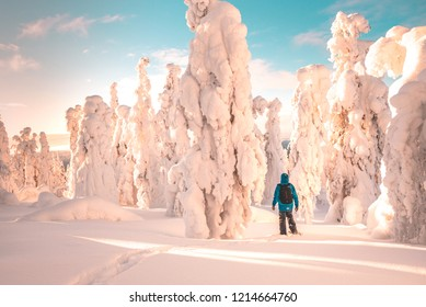 Landscape of Lapland, frozen trees, person walking, winter time