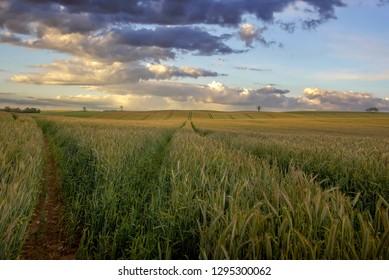 Landscape of a large hay field, Jutland, Denmark.