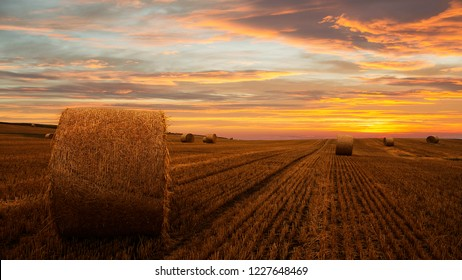 Landscape of a large hay field with numerous straw bales, Jutland, Denmark