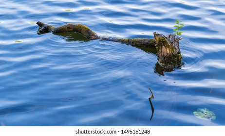 Landscape with the log and water surface