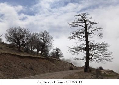 landscape lone tree, Of the Abr Jungle of Shahrood Iran