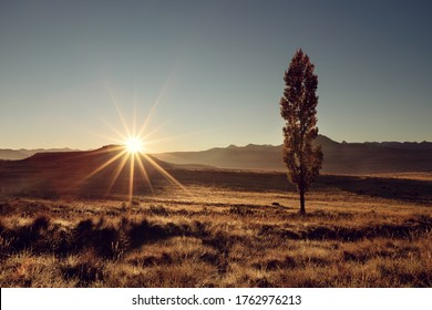 Landscape with a lone tree and the sun rising behind it over mountains