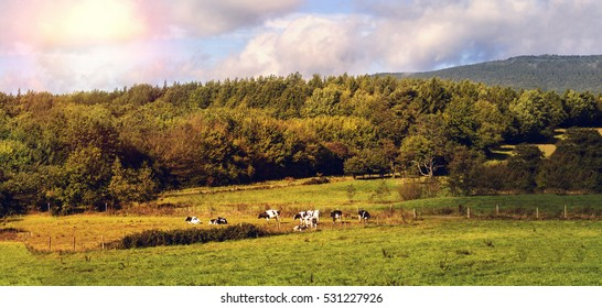 Landscape in a low mountain range with cow pasture in the evening sun