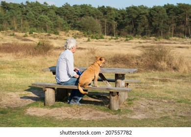 landscape with man and dog at the wooden bench