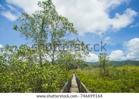 Landscape Mangrove Forest Wooden Bridge Pancer Stock Photo Edit Now