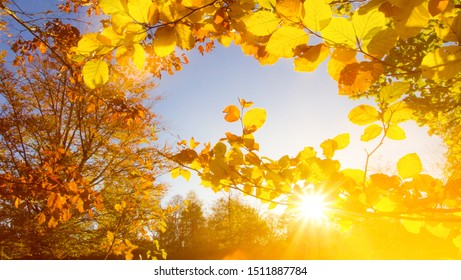 Landscape with many colorful leaves and blue sky with sun - autumnal panorama / background - Shutterstock ID 1511887784