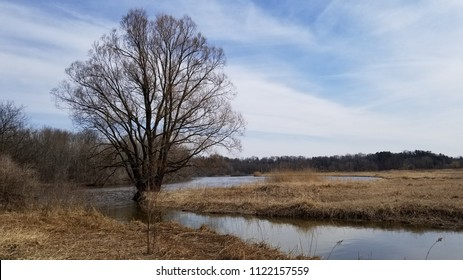 Landscape of marshland with a leaf bare tree silhouetted against a cloudy blue sky. Dead marsh grasses, water with reflection & forest in the distance. Captured on a crisp early spring afternoon.
