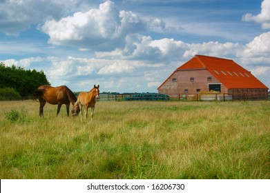 Landscape: meadow with horses and a barn