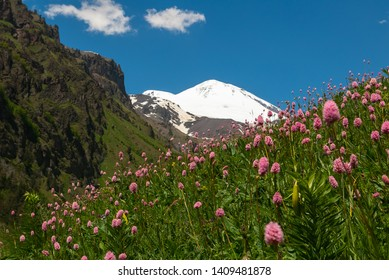 Landscape with meadow of pink flowers in foreground and Mount Elbrus in background. View of Mount Elbrus from south. Meadow flowers in mountain. Snowy mountain peaks