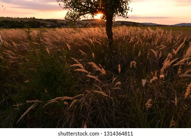 Landscape with meadow, tree and sun in evening time.