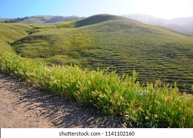 Landscape of Misson Peak in Spring in California, United States
