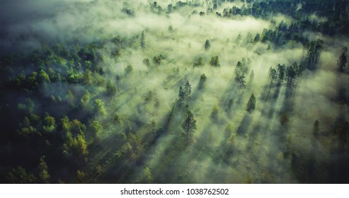 Landscape misty. Fantastic dreamy sunrise on rocky mountains with view into misty valley below. Foggy clouds above forrest. View below to fairy landscape. Foggy forest hills.