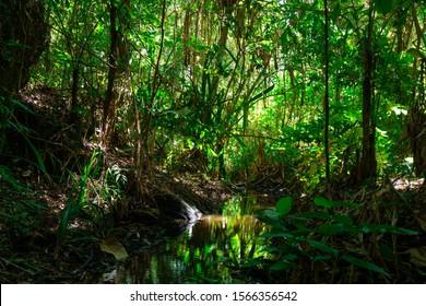 landscape of Moist Evergreen Forest
