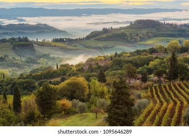 Landscape with a morning fog and vineyards in the vicinity of the city of San Gimignano, Tuscany