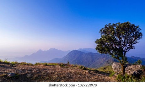 Landscape of mountain high view with big tree in the morning at Phucheefah Chiangrai, Thailand