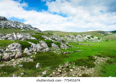 Landscape of a mountain plateau. With stones and plants. Fresh green grass and mountain bushes.