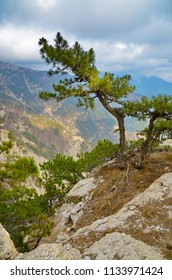 Landscape in mountain of south Crimea. Pine tree on edge closeup. Forest on slope. Clouds over Ai-Petry plateau.