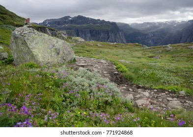 Landscape with mountain trail and summer flowers in Hardangervidda National Park, Norway, Scandinavia