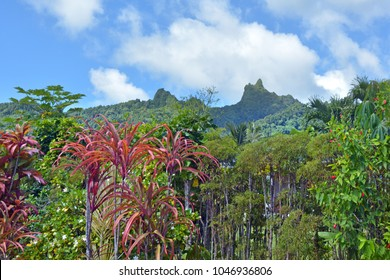 Landscape mountain view of Te Manga mountain in Rarotonga Island. Te Manga is the highest point of the Cook Islands
