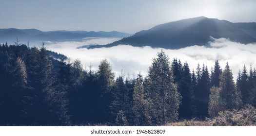 Landscape of mountains in the fog, the evergreen trees in the early morning background in the clouds. Dark tone and vintage image