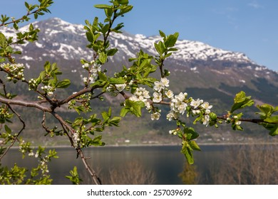 Landscape with mountains in Norwegian village. spring in Norwegian fjords. view through the blooming cherry branch