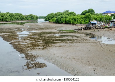 Landscape of mud flat, Thailand.