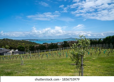 Landscape from Mudbrick vinyards across harbour to Rangitoto Island and Auckland New Zealand.