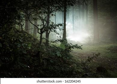 Landscape. Mystery forrest.